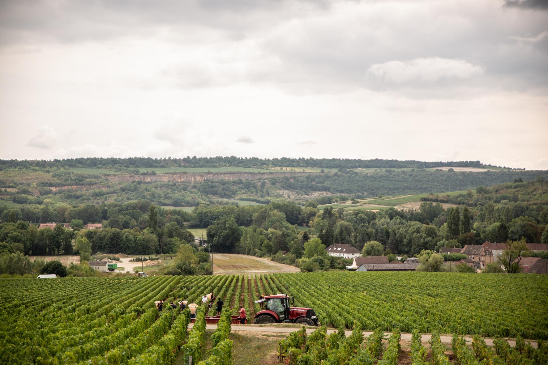 Vendanges 2018 tracteur - Grand vin d'exception Domaine Jeannot