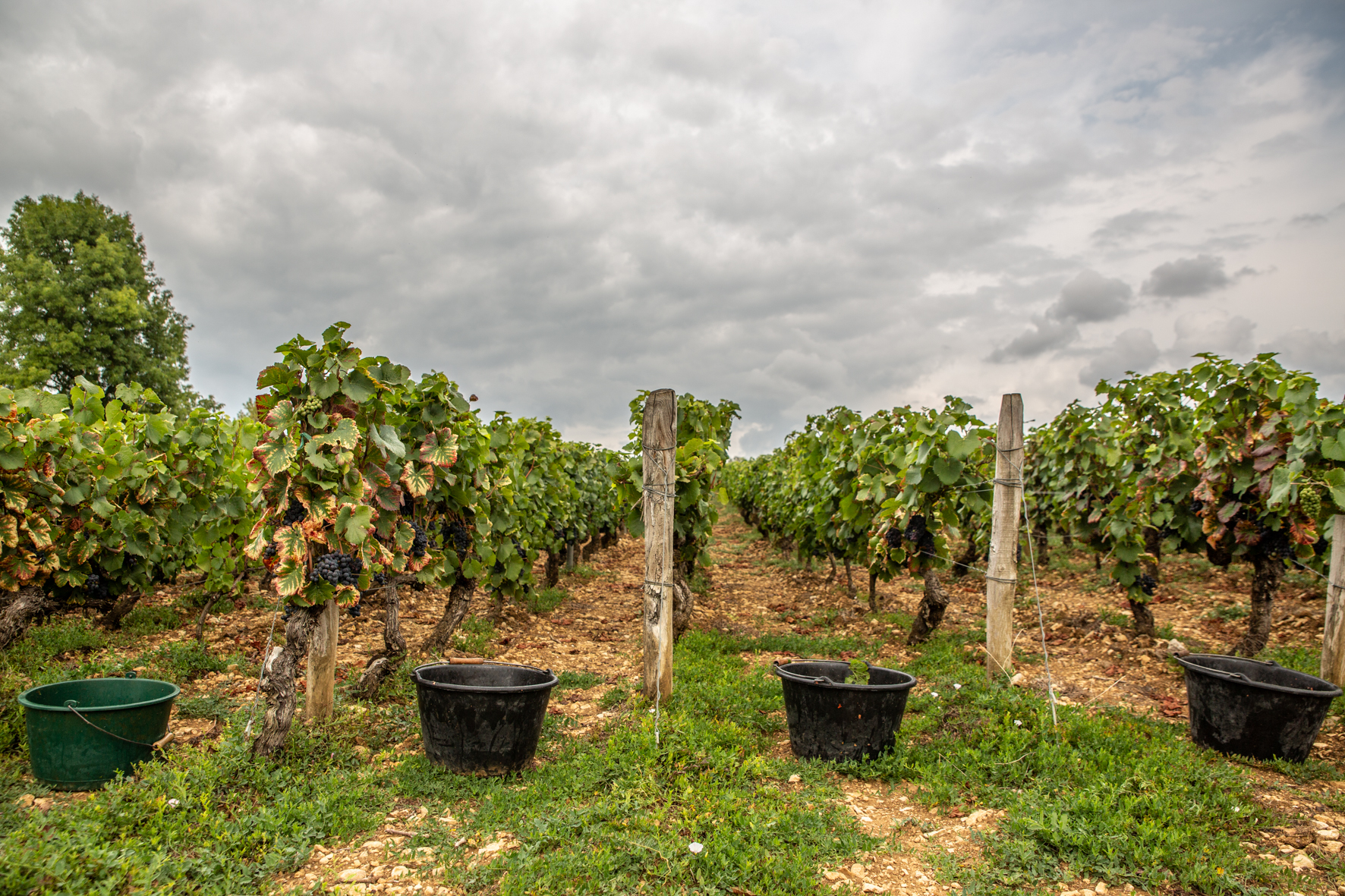 Vendanges 2018 plans - Grand vin d'exception Domaine Jeannot