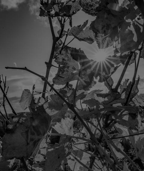 decouvrez nos vins - Grand vin d'exception Domaine Jeannot
