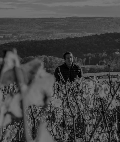 le domaine - Grand vin d'exception Domaine Jeannot