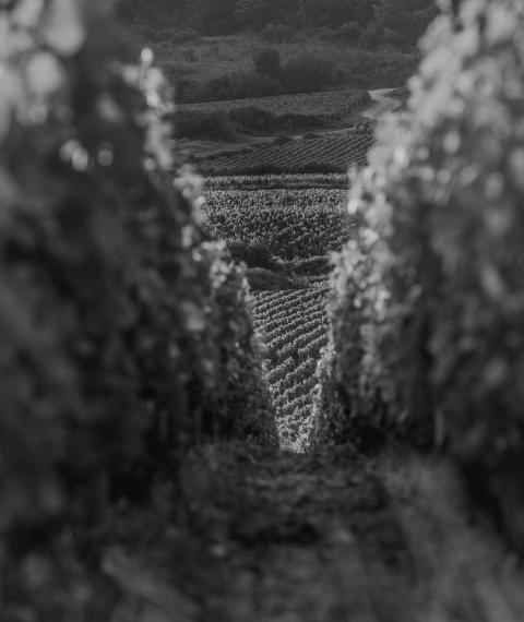 notre histoire - Grand vin d'exception Domaine Jeannot