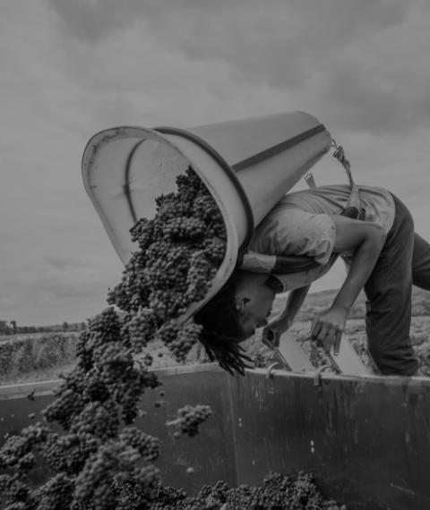oenotourisme - Grand vin d'exception Domaine Jeannot
